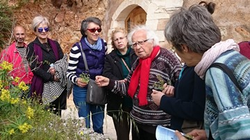 Actions for Herbs in Crete